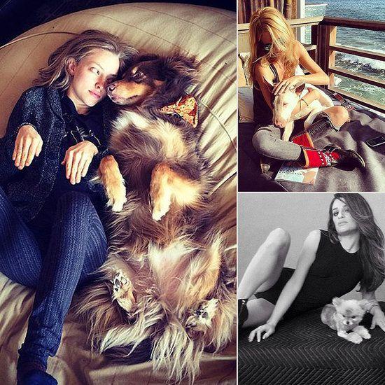 October Celebrities and Animals