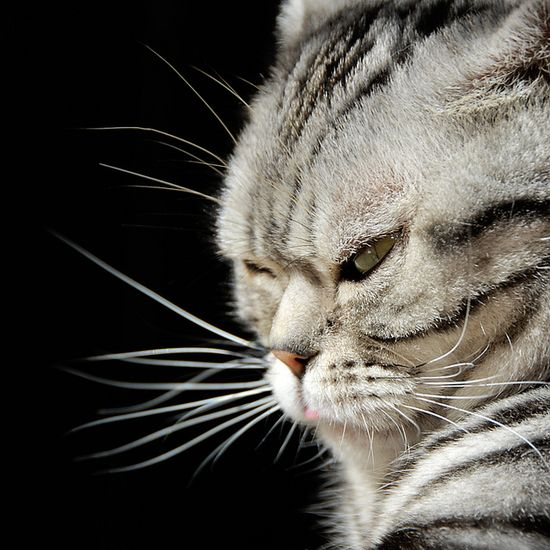 """Pfft...""""Anyone who claims that a cat cannot give a dirty look has either never kept a cat or is singularly unobservant."""" --Maurice Burton"""