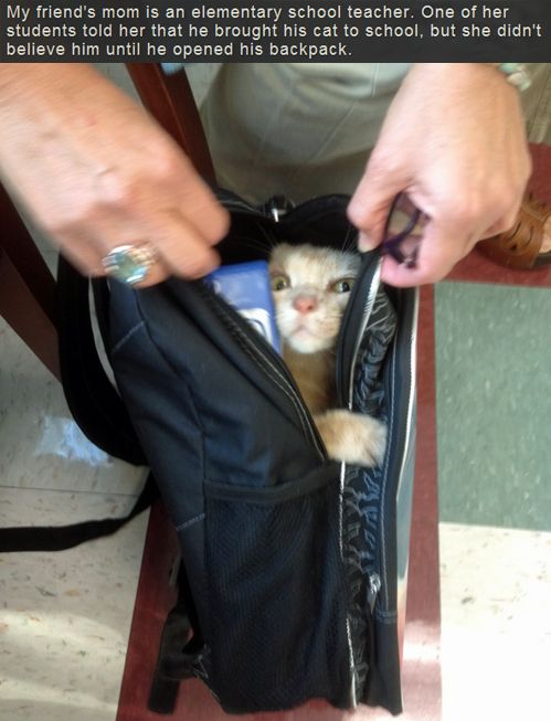 My friends mom is an elementary school teacher.  One of her students told her that he brought his cat to school, but she didn't believe him until she opened his backpack.