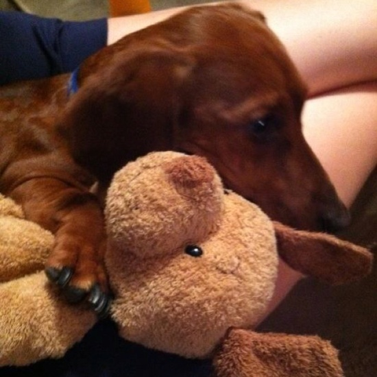 Dogs & their stuffed animals