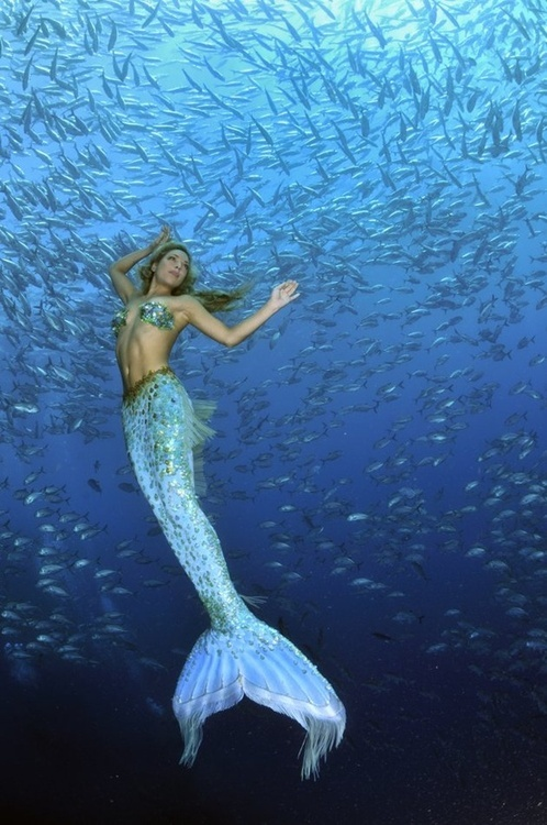 Mermaid Surrounded By Fish
