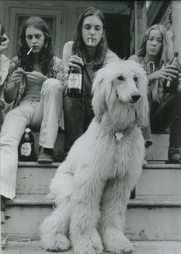 Afghan hound fitting in with the hippies, 1973.
