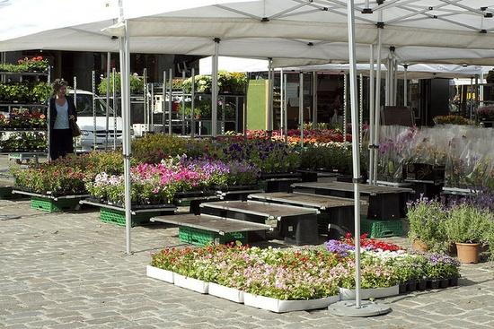 A flower market in Oslo mid-setup
