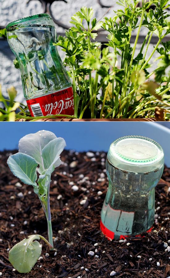 Creative reuse: glass bottle watering 'globes' PERFECT!