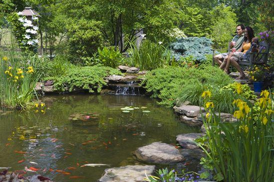 Ideas for plants around pond