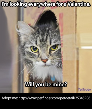 This adorable adoptable #cat doesn't have a #Valentine. She's in Spartanburg, SC ~ Help her out by repinning?