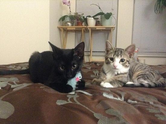 Companion Kittens