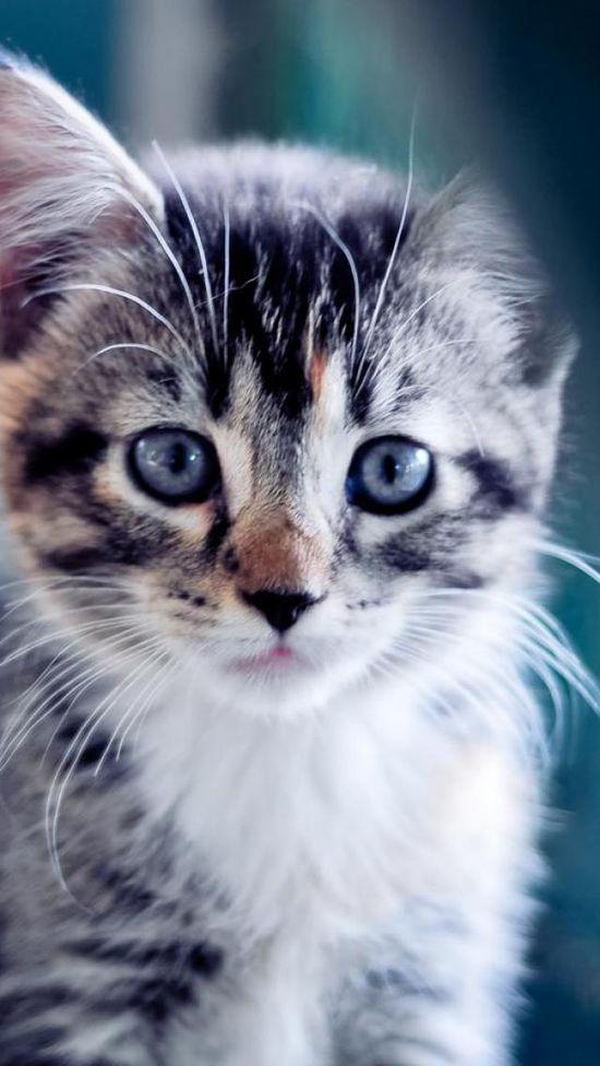 #Cute, #Kitten, #Fluffy, #Animal