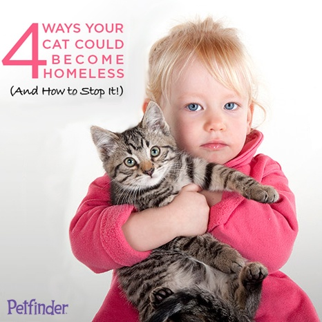 Repin to keep cats in their homes!