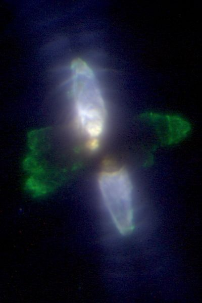 Super-sharp image of the Egg Nebula imaged with adaptive optics at Keck Observatory.