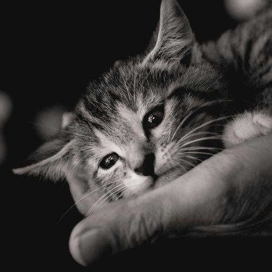 """""""Baby Cat"""""""