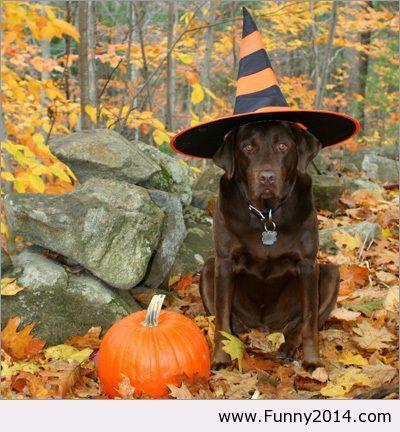 Halloween funny photo 2013