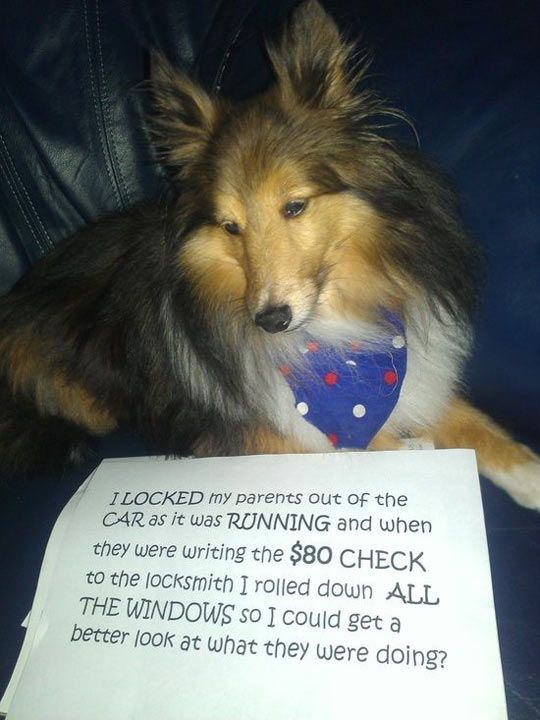The best case of dog shaming…