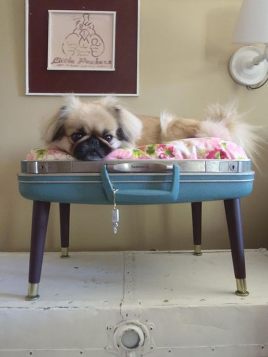i've always loved these upcycled pet beds made from old suitcases, though i have yet to find a suitcase big enough to sleep my st. bernard! perhaps i should stick to upcycling one for the fat cat instead...