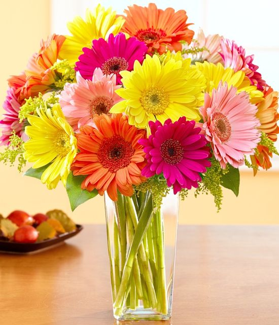 Gerbera Daisies  Daisy Flower