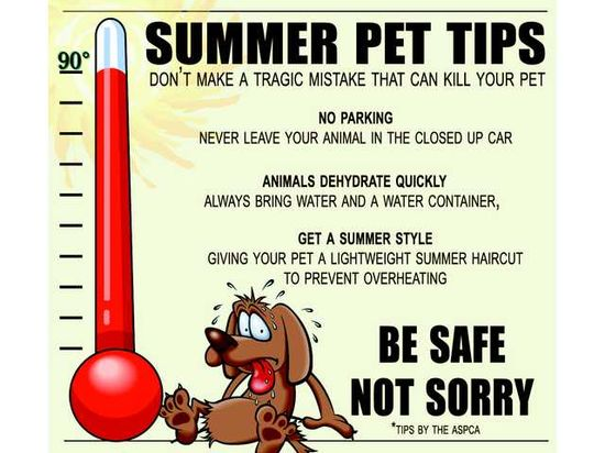 Summer pet tips