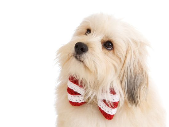 The Nautical Bow Tie for Small Dogs in Red by CharlieHeartsDiesel, $14.00