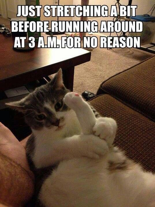 I swear my cat does this! LOL So cute. Happy Caturday Saturday. Incensewoman