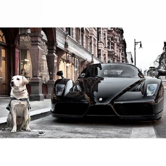Lucky Dog with his Ferrari Enzo