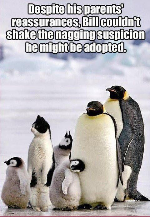 Despite his parents' reassurance, Bill couldn't shake the nagging suspicion he might be adopted..... LOL!!! This took me a sec. :) #Penguin #Cat #Animals #Funny #Humor
