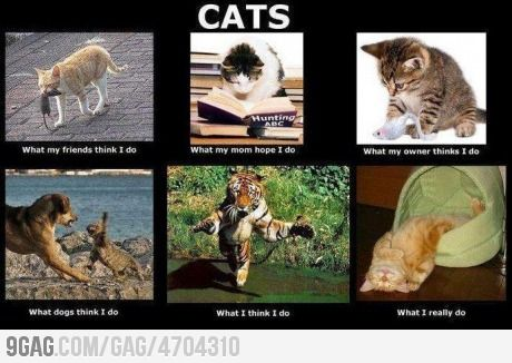 """My life as a cat - """"What my friends think I do"""" is totally true."""