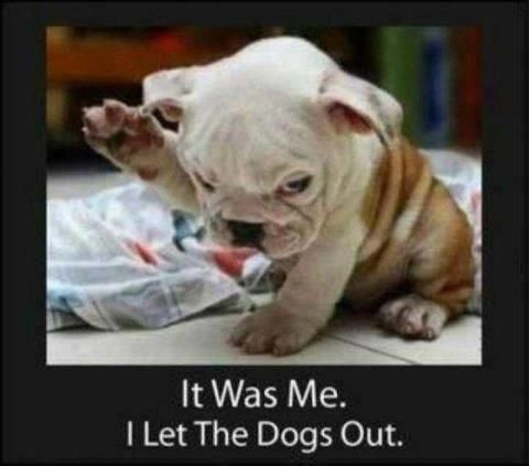 who let the dogs out? ?