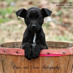 Dove (Local 2/9!) is an #adoptable Terrier Dog in #Boston, #MASSACHUSETTS. For more information about this dog, please contact his/her adoption coordinator: mailto:Kellypawsn... Please send inquiries to ...