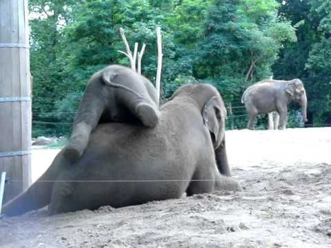 Video: Baby Elephant Annoys His Mom