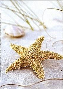 love starfish!