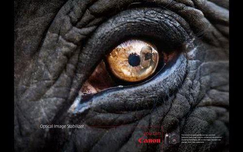 Canon Camera Ad