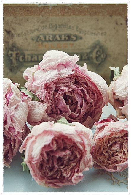 ? dried roses