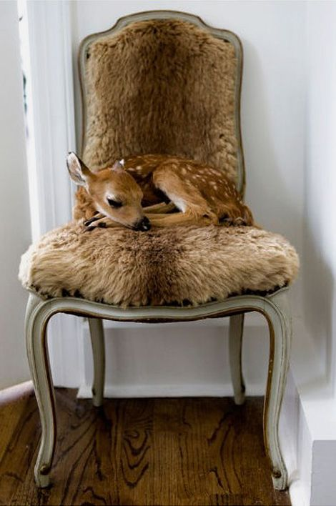 bambi ?