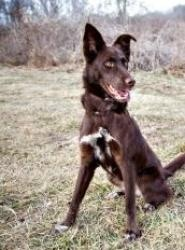 Adoptable Fridays: Meet Sinclair! Sinclair is an adoptable Shepherd Dog in Divide, CO. My name is Sinclair and I am a fun loving girl who is well mannered and very sweet. Find out more about Sinclair! #pets #dogs #animals