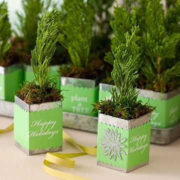 personal evergreen saplings for you Christmas table. so cute! Good party favors!!