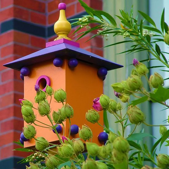 cheerful birdhouse