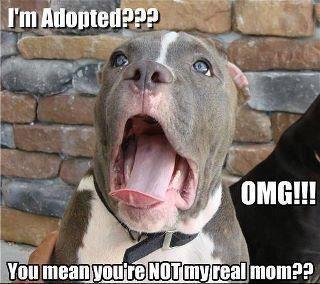 hahaha dog adopted
