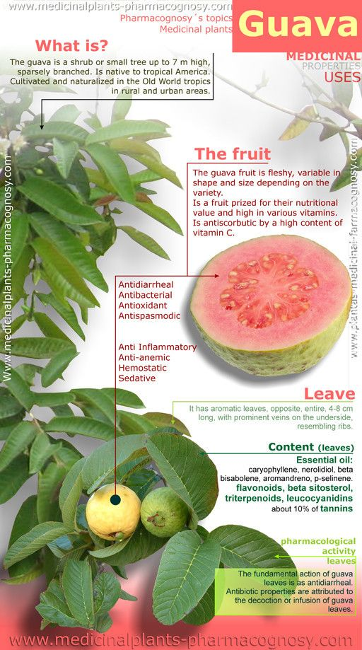 Guava tree health benefits