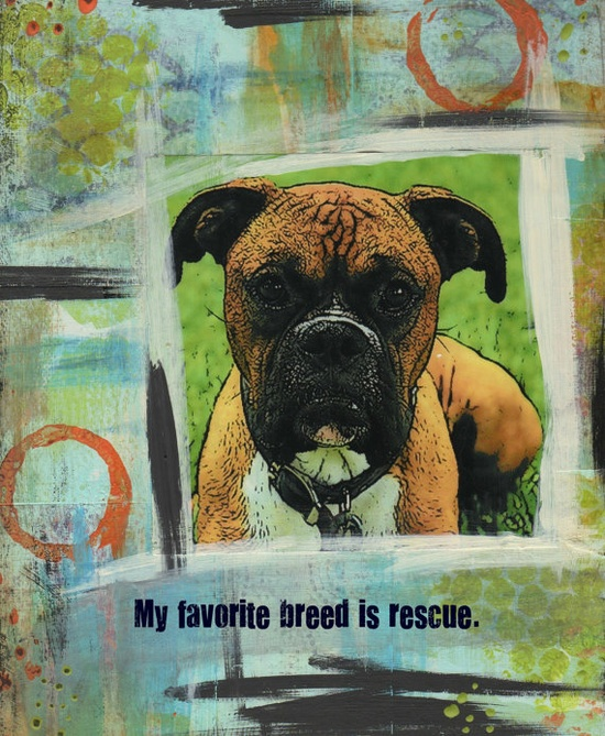 Please consider adopting or fostering a dog from your local shelter!
