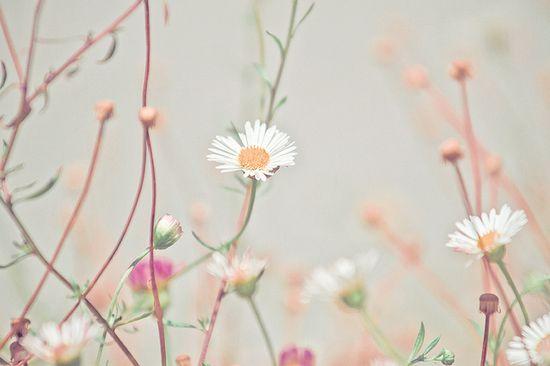 Sun On Ground by JoyHey, via Flickr