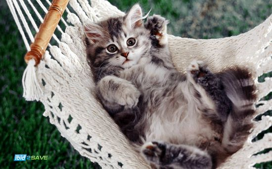 Awww #kitten #cat #animals #cute #pets #cuddle #love #fuzzy #love #playful #playing #ibid2SAVE