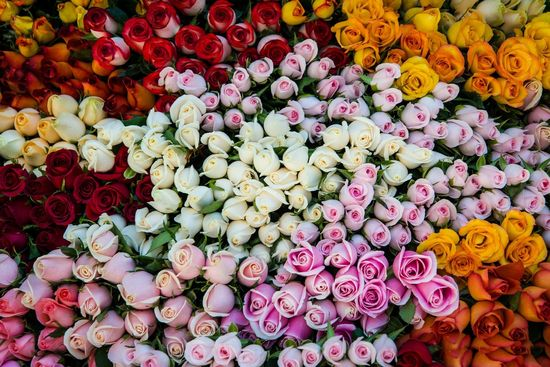 *** Colorful Roses *** wallpaper free