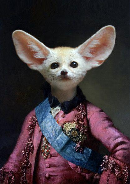 Sir Fennec...
