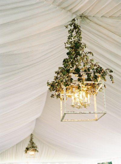 Vine wrapped chandeliers for a tented reception.