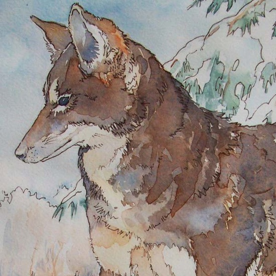 Coyote in Winter original watercolor in tan grey by BlueOtterArt