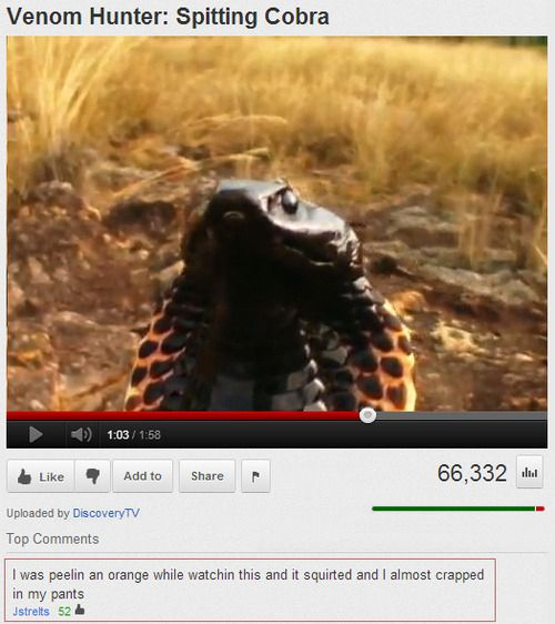 The 25 Funniest YouTube Comments Of TheYear