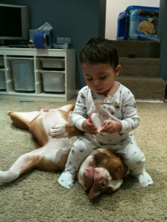 Vicious child attacks helpless pit bull!  Love this!