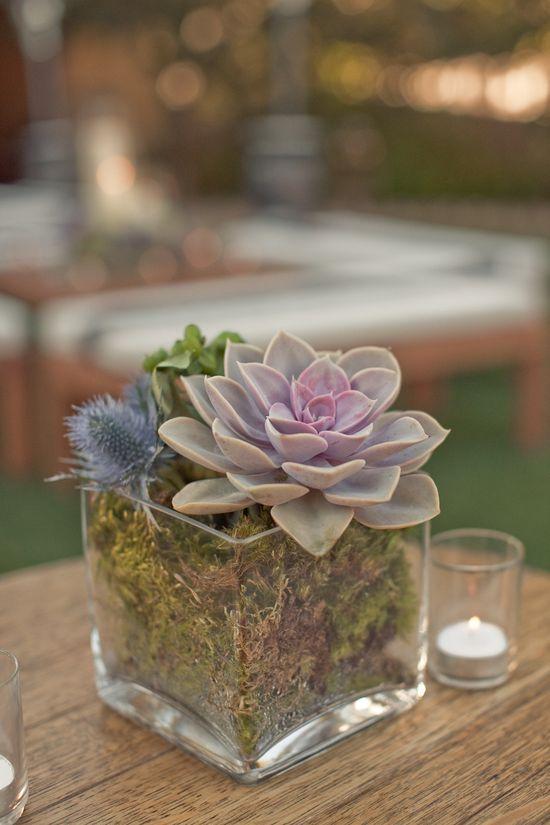 Succulents are a rustic wedding must! Photography by Carlie Statsky Photography / carliestatsky.com, Wedding Design + Planning by Amy Byrd Weddings / amybyrdweddings.com, Floral Design by Fleurs du Soleil / kimenglandflowers...