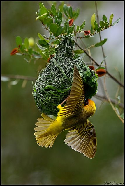 Building a nest ~
