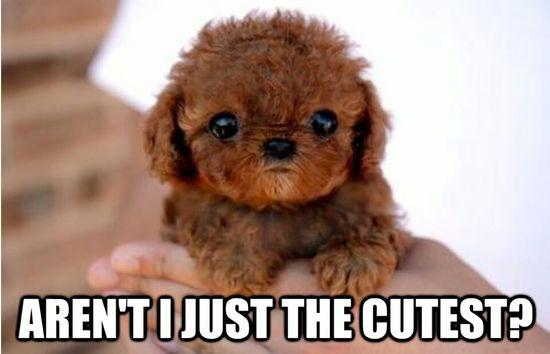 teenie baby dog