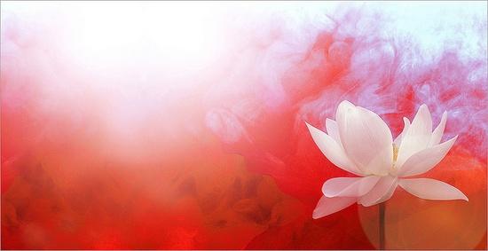 Bahman Farzad's most popular lotus image internationally! - IMGP7691-base-sq-red-1000